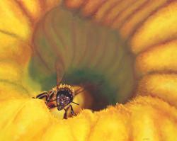 """""""Squash Blossom Bee"""""""