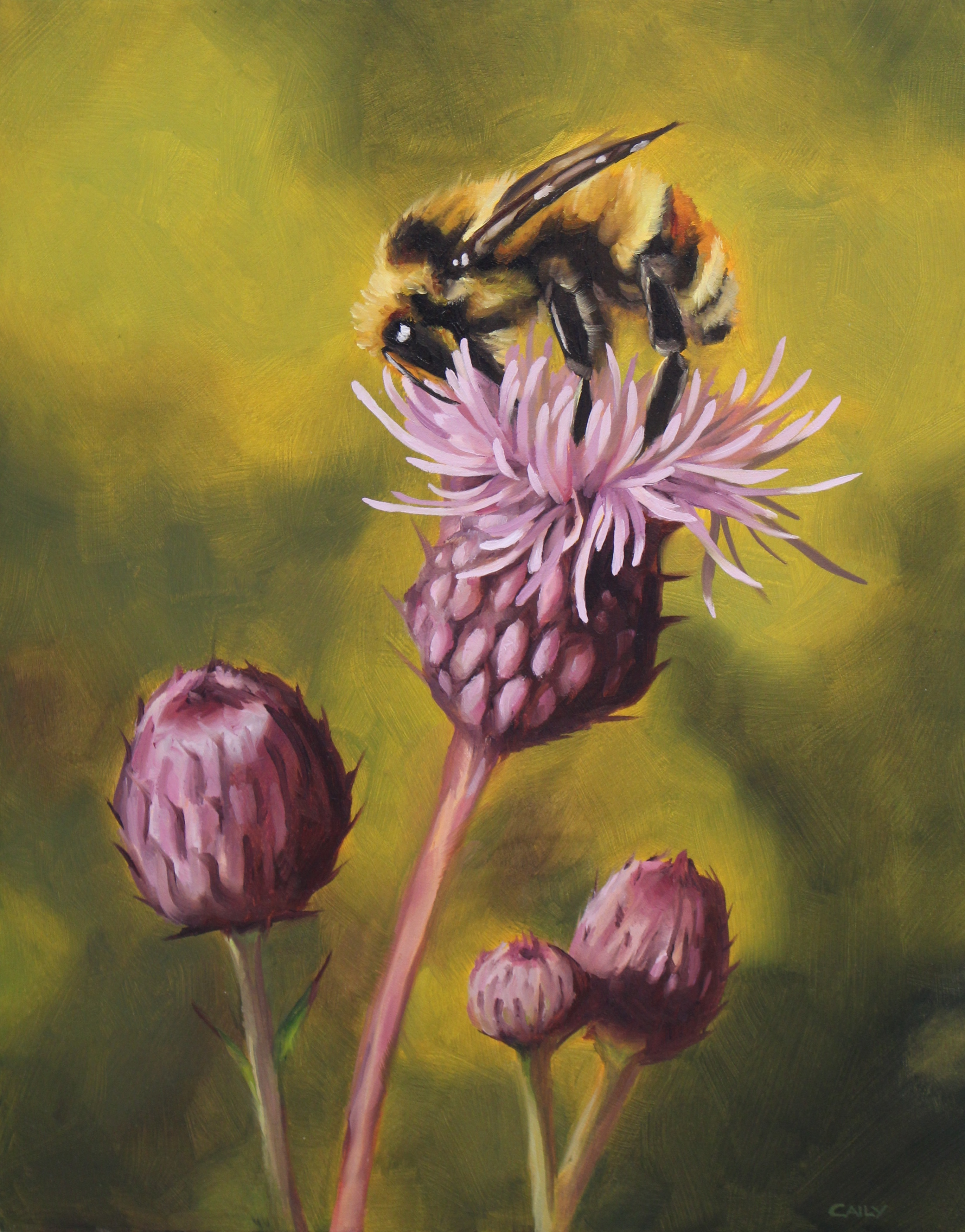 """""""Thistle and Bombus"""""""