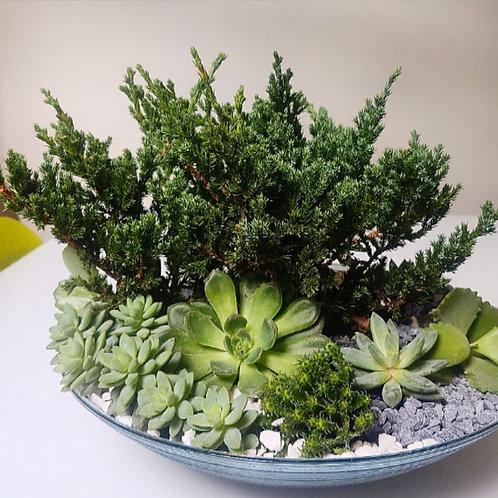 Terrário com bonsai