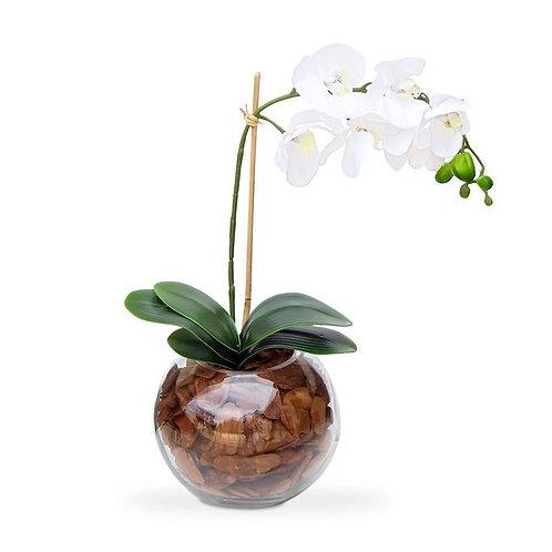 Orquidea G phalaenopsis branca no aquario de vidro com cascalho