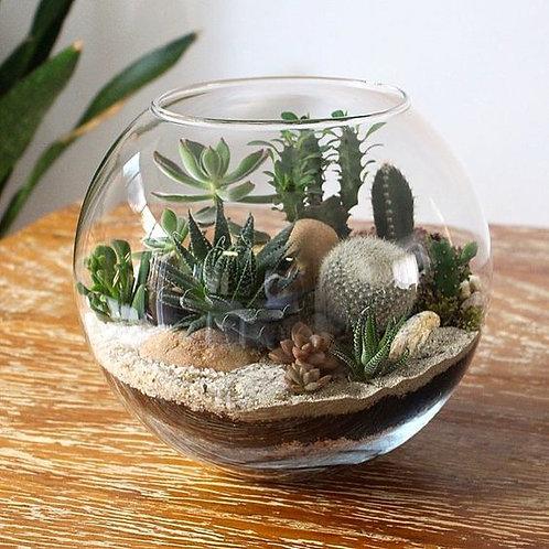 Terrario P em aquario