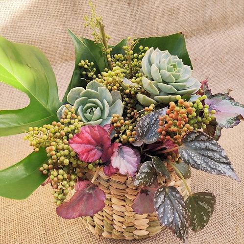 Arranjo M de suculentas / sementes / vegetação no cesto de palha