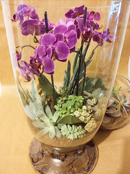Terrário G em vidro com orquideas, suculentas e cactos