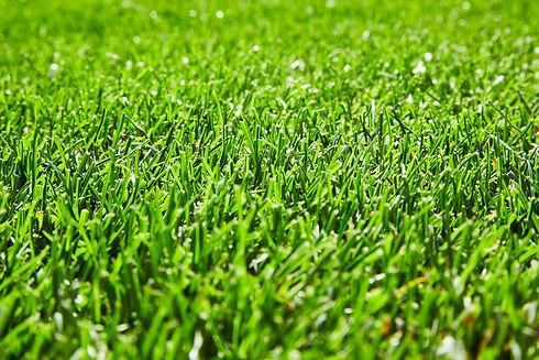 Græs_tæt_på_2_1899 copy.jpg
