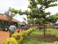 November 2013 Launch at St. Biina Primary School