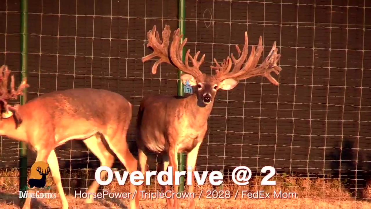 Overdrive @ 2