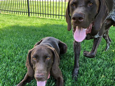 Lucky and Copper