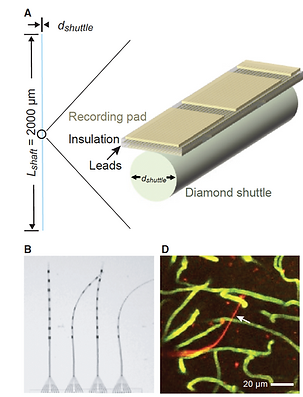 20. Can One Concurrently Record Electrical Spikes from Every Neuron in a Mammalian Brain?