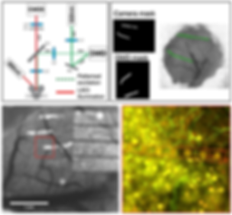 19. Nanoelectronics enabled chronic multimodal neural platform in a mouse ischemic model