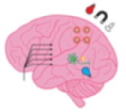 18. Nano functional neural interfaces