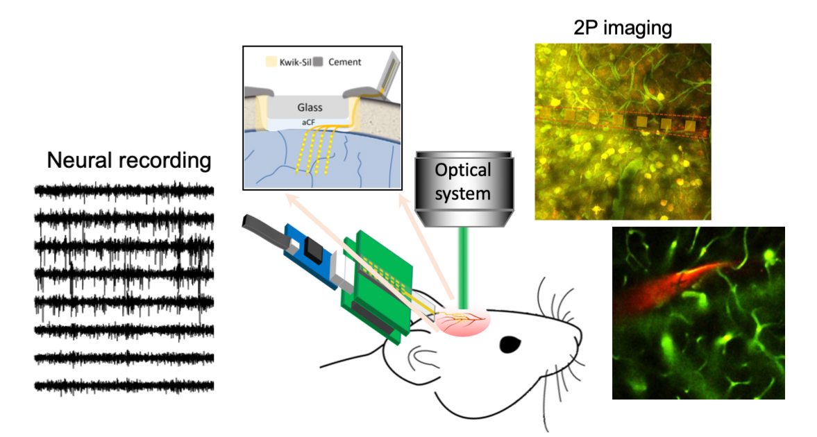 multimodal neural interface that combines imaging and neural recording
