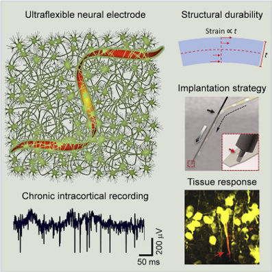 23. Ultraflexible neural electrodes for long-lasting intracortical recording
