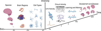 24: Recent Advances in Electrical Neural Interface Engineering: Minimal Invasiveness, Longevity, and Scalability