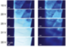 13. Uncovering edge states and electrical inhomogeneity in MoS2 field-effect transistors