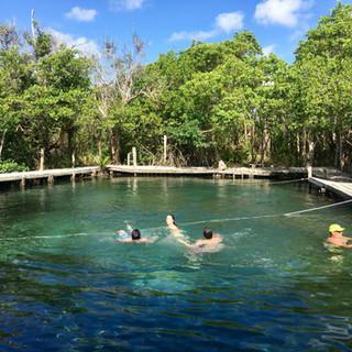 Yalahau in the mangrove