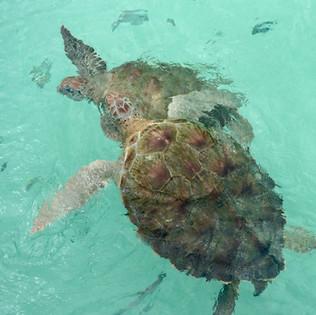 snorkeling in akumal