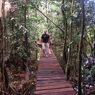 Path in the jungle