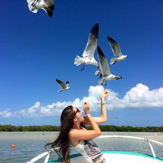 Feeding birds