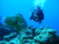 Plongée Cozumel