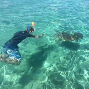 snorkeling avec les tortues