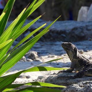 Lazy lizard