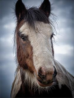 Brandon Horses Nov 2020 (19)