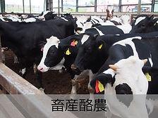長村牧場(畜産業)文字のせ.jpg