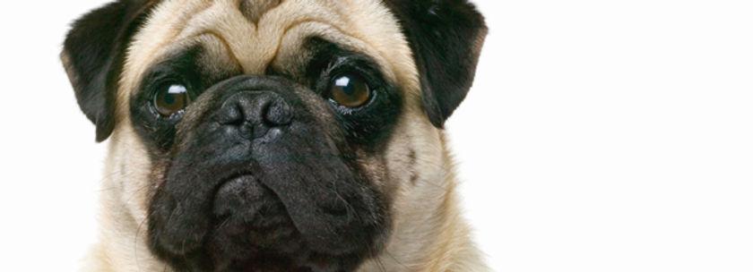 puppy image 5.jpg