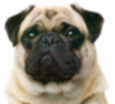 Edwards Pet Spa, Dog Grooming, Hever, Kent