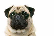 高齢動物の管理|西山動物病院|流山市・松戸市・柏市・野田市