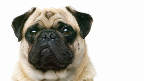 The Importance of Emotional Support Animals