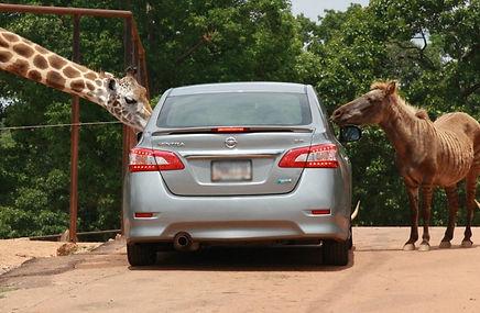 wild-animal-safar-drive-thru-animal-park