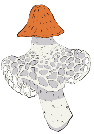 Lace Fungus.png