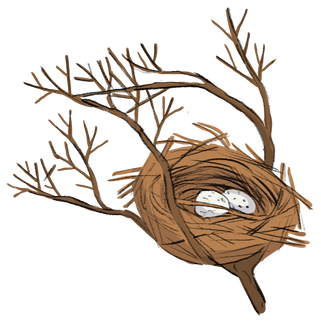 Nest.png