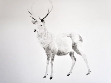 Sudeley Street Deer