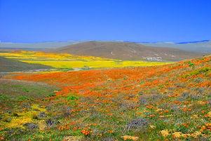 Antelope-Valley-CA-Tourism.jpg