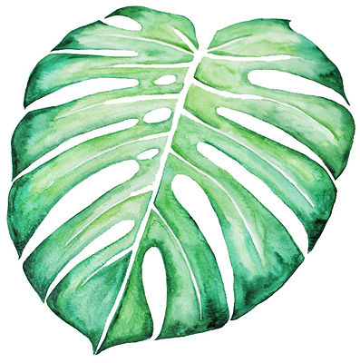 monstera feuille copie copie.jpg