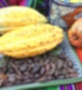 Cacao Beans and Cacao Pods