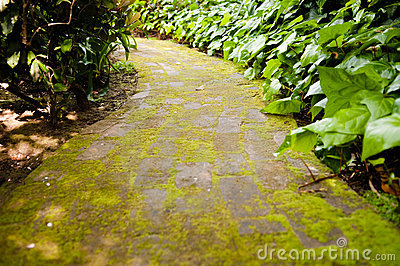 moss-covered-path