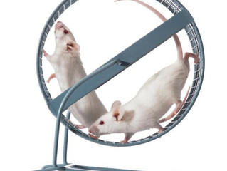 Get motivated to exercise:  rats do it, you can too