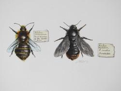 Bees 001.JPG