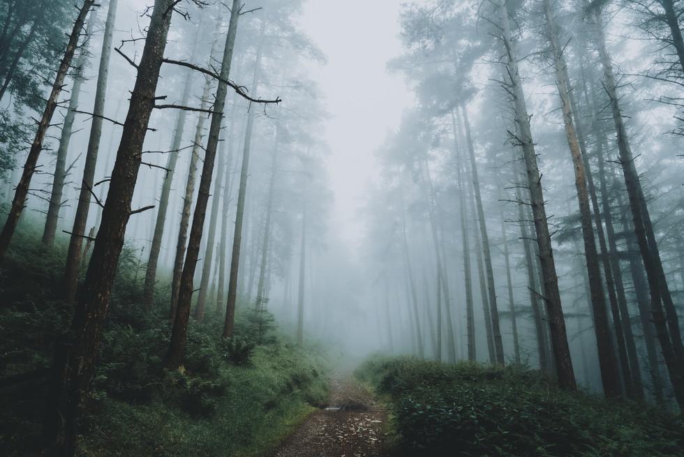 Foggy Trails