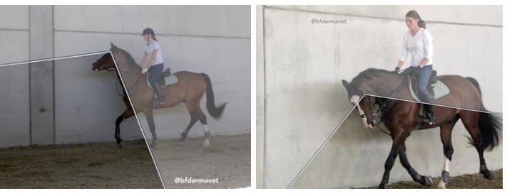 Come vede il cavallo montato