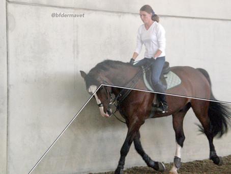 Come il cavallo percepisce l'ambiente che lo circonda.