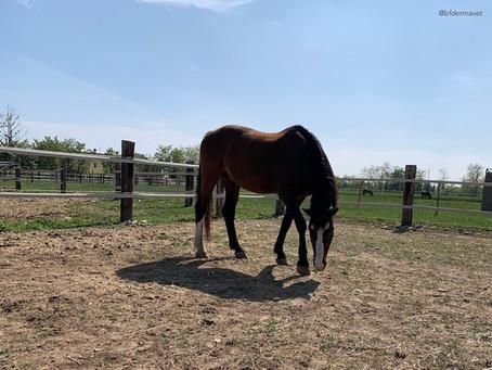Malattie della pelle del cavallo: le piaghe estive.