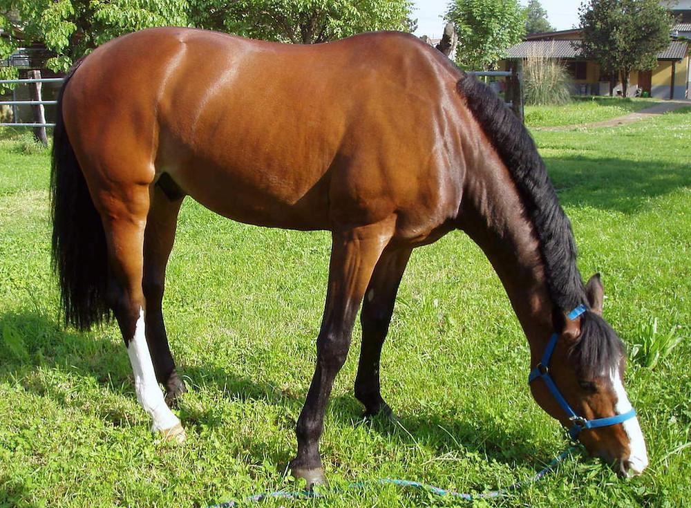 Shampoo per cavalli, Dr.ssa Beatrice Funiciello