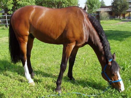 Shampoo per cavalli: sono tutti uguali?