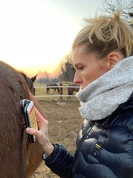 Cavallo, dermatologo cavalli
