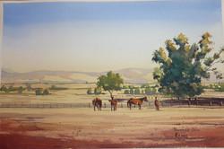 Summer Dayz & Horses.JPG