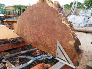 Burr Oak Slabs